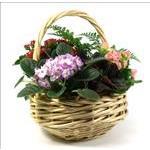 1991 - Basket Garden Santa Maria CA delivery.