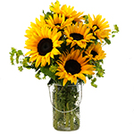 2363 - Sunflower Joy - Santa Maria CA delivery.