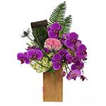 2456 - Keane Orchid Arrangement Santa Maria CA delivery.
