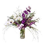 2619 - Leilani Orchid Arrangement Santa Maria CA delivery.