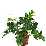 Green Plants from Rose of Sharon Florist
