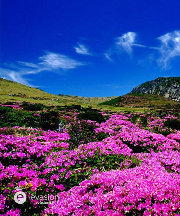 fleurs-printemps-evasion