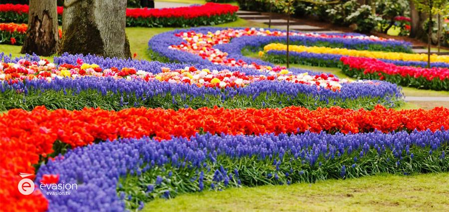 Top 10 des meilleurs endroits pour voir le printemps en fleurs