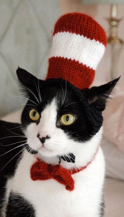 Cat-in-the-Hat-Halloween-Costume
