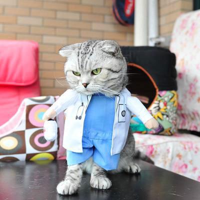 Chat-en-docteur