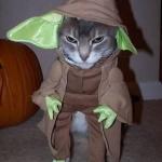 Chat-Yoda