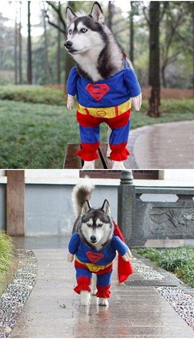 Chien-superhéros