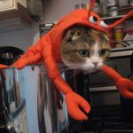 Chat-homard