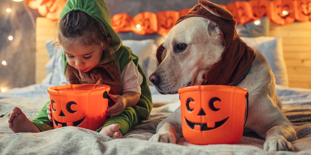 Animaux Halloween