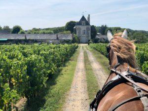 Calèche vignoble Loire
