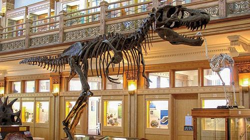 musee-redpath-dinosaure-enfants