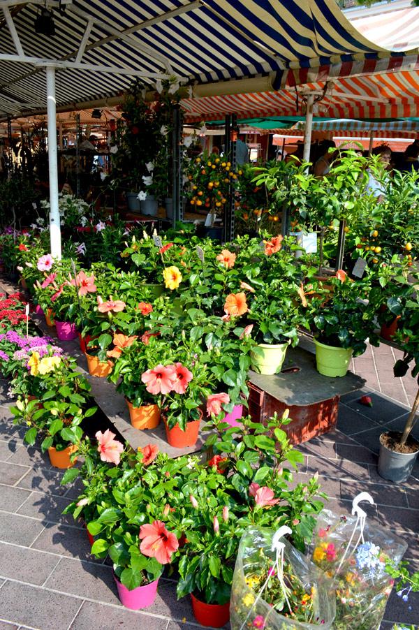 COURS-SALEYA-Marché-des-fleurs-Crédit-photo-©-CRT-Côte-dAzur-France