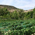 Voyage en Arizona Vadrouiller-dans-les-vignobles