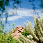 Voyage en Arizona Visiter-le-jardin-botanique-du-désert