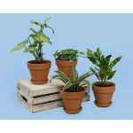 24-Quatuor de plantes tropicales, Plantzy