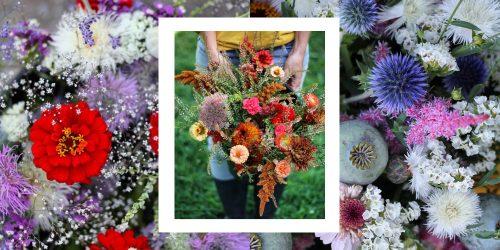 Achat de fleurs écolos: 5 fermes locales