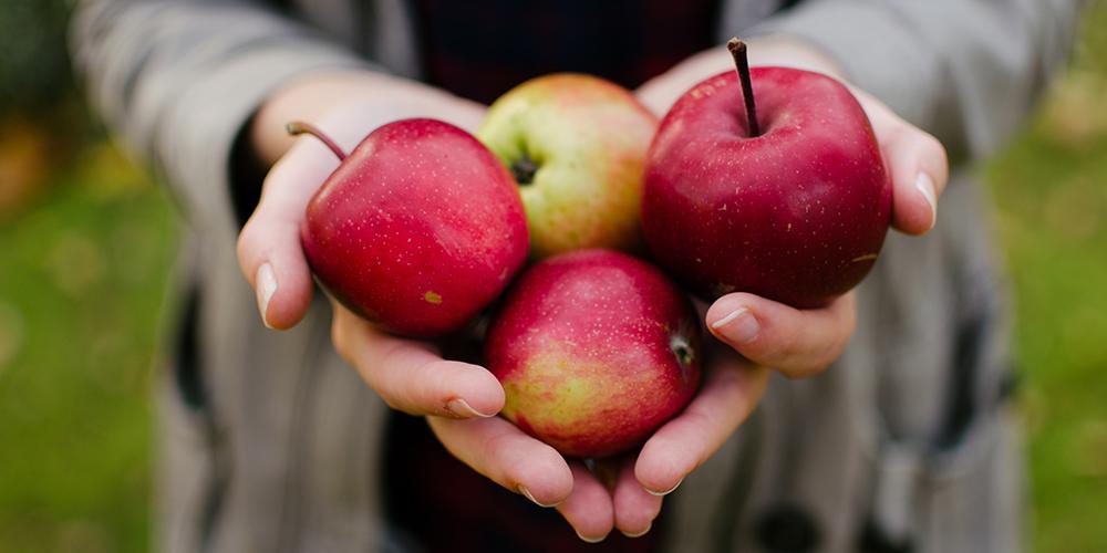 le-temps-des-pommes