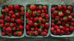 Thumbnail strawberries  22
