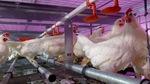 Thumbnail eggsonfarm barns 9