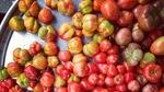 Thumbnail u 2 plant based nutr