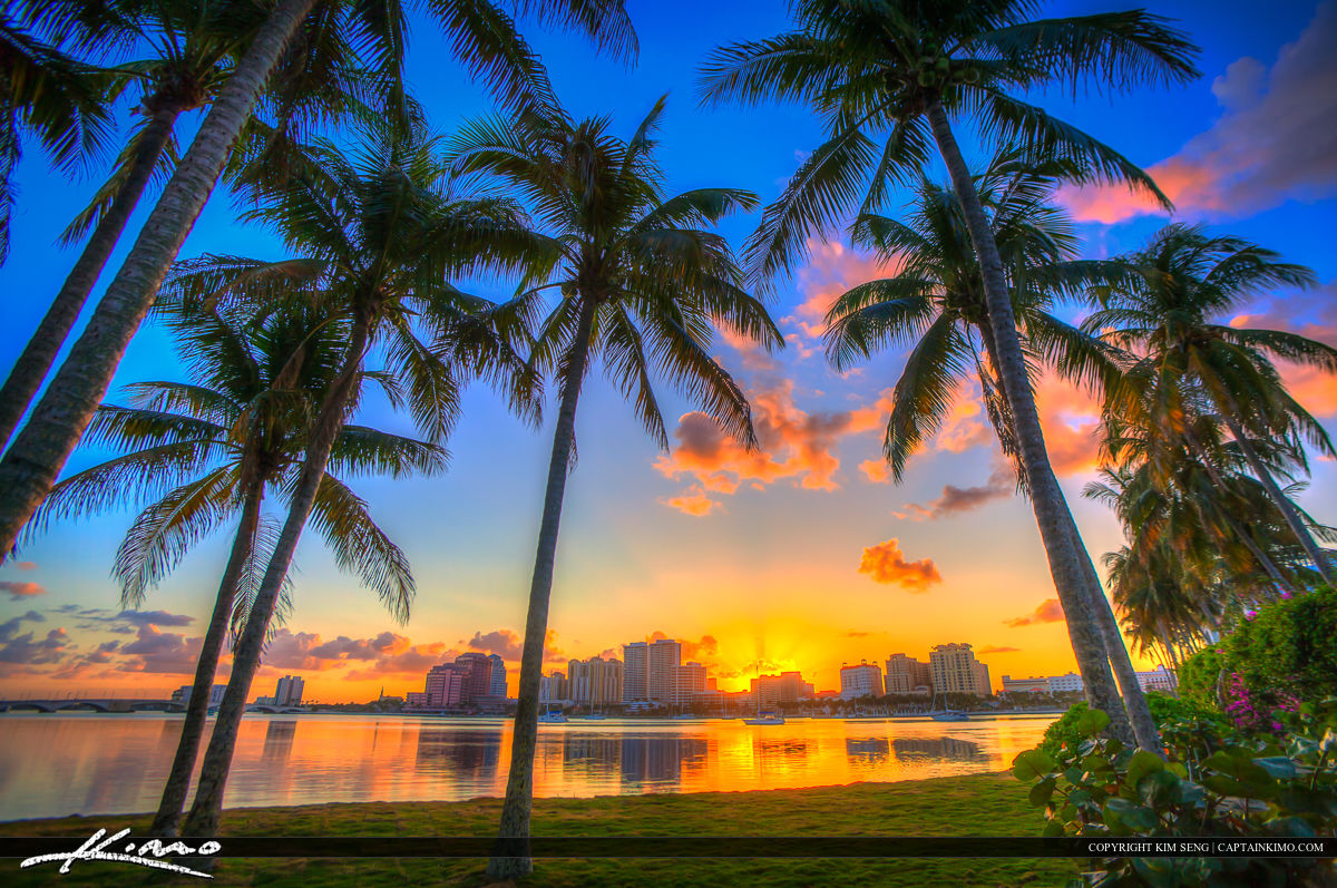 Speaking. palm tree beach sunset think, that
