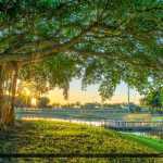 Banyan Tree at Dreher Park in West Palm Beach FL
