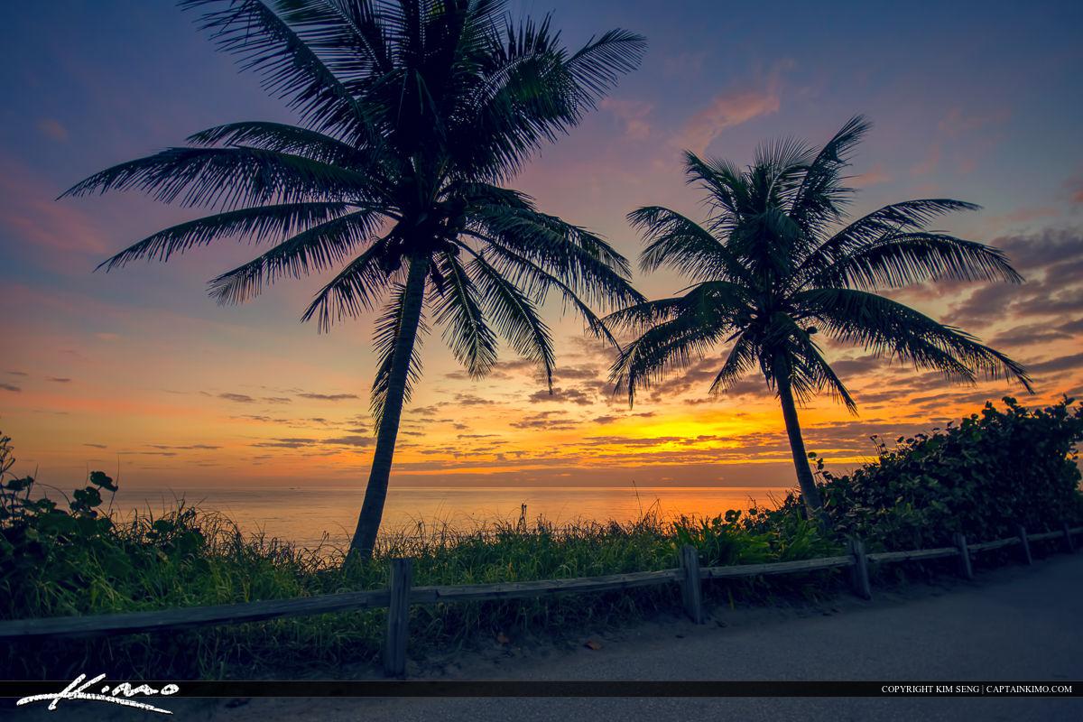 palm tree sunrise at beach jupiter island florida royal stock photo. Black Bedroom Furniture Sets. Home Design Ideas