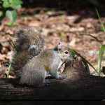 Squirrel Sitting on Log