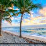 Dania Beach Florida Coconut Trees along Beach