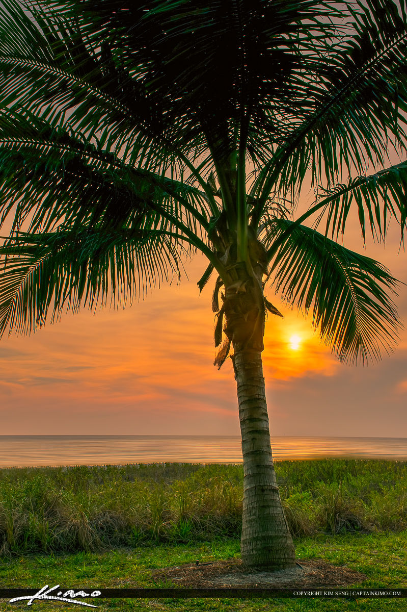 Naples Florida Coconut Palm Tree At Sunset