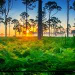Beautiful Foggy Morning Sunrise Florida Landscape Palm Beach Cou