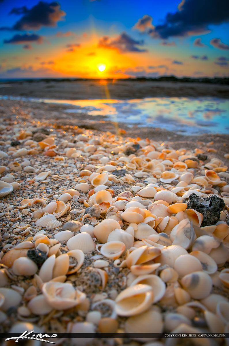 seashell | Product Tags | Royal Stock Photo
