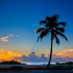 Coconut Tree Sunrise at Palm Beach Island Florida