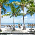 Coconut Tree along Key Largo Coast Florida