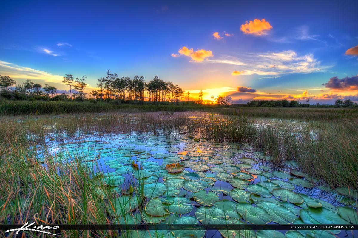 Lovely Sunset Wetlands Florida Landscape Palm Beach Gardens