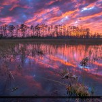 Florida Wetlands Landscape Sunset Colors Palm Beach Gardens Purp