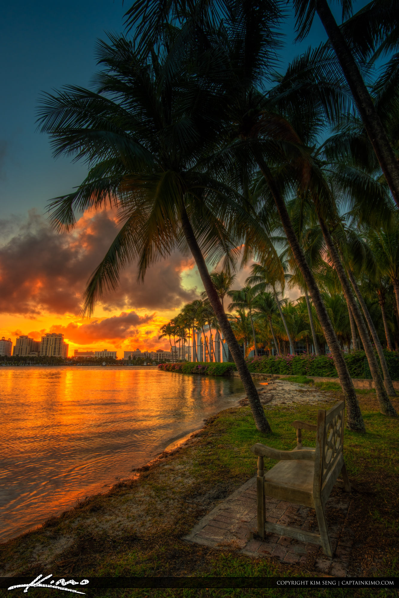 Coconut Palm Tree Sunset Beach Island