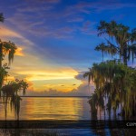 Cypress Tree Sunset Lake Istokpoga Florida Panorama