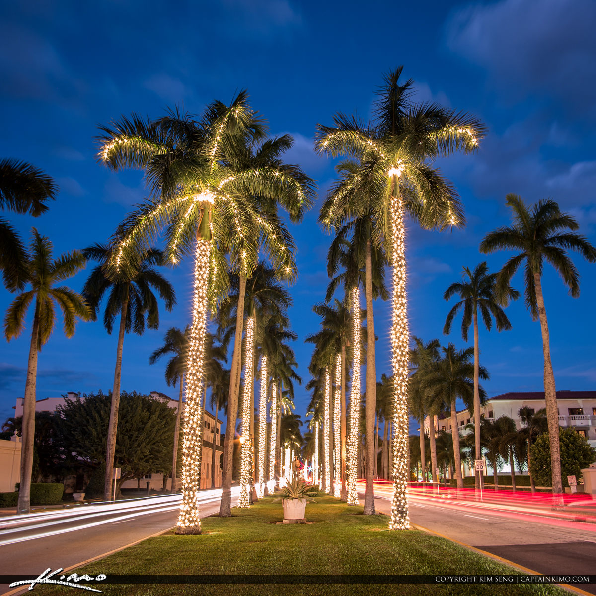 Royal Palm Tree Christmas Lights Palm Beach Island & Christmas | Product Tags | Royal Stock Photo