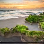 Algae on Rock at Carlin Park Florida