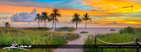 Singer Island Beach Sunrise with Coconut Tree Wide Panorama