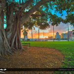 Banyan Tree Palm Beach Island West Palm Beach Sunset