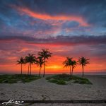 Explosive Sunrise Colors Over Cocnut Trees at Beach Square