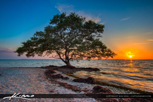 Picnic Island Park Sunset Mangrove Tree Tampa Bay