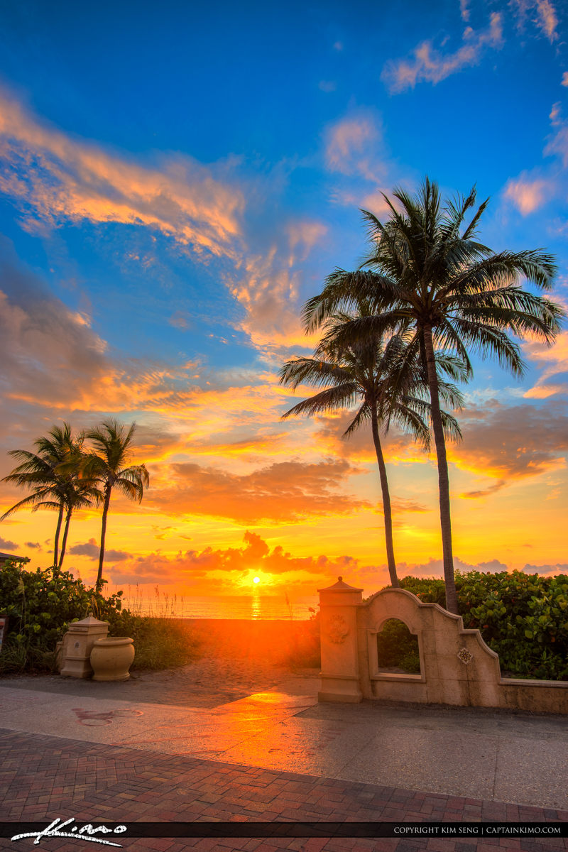 Hollywood Beach Magical Sunrise With Tall Coconut Trees Royal Stock Photo