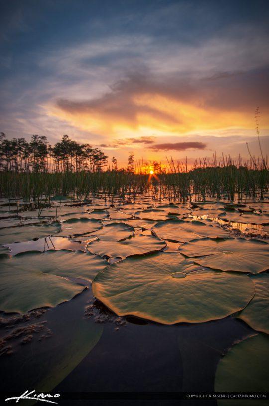 Florida Wetlands Landscape Palm Beach Gardens Sunset