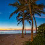 Sunny Isles Beach Coconut Tree Early Morning North Miami Florida
