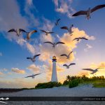Cape Florida Lighthouse Key Biscayne Florida Sunset Seagulls