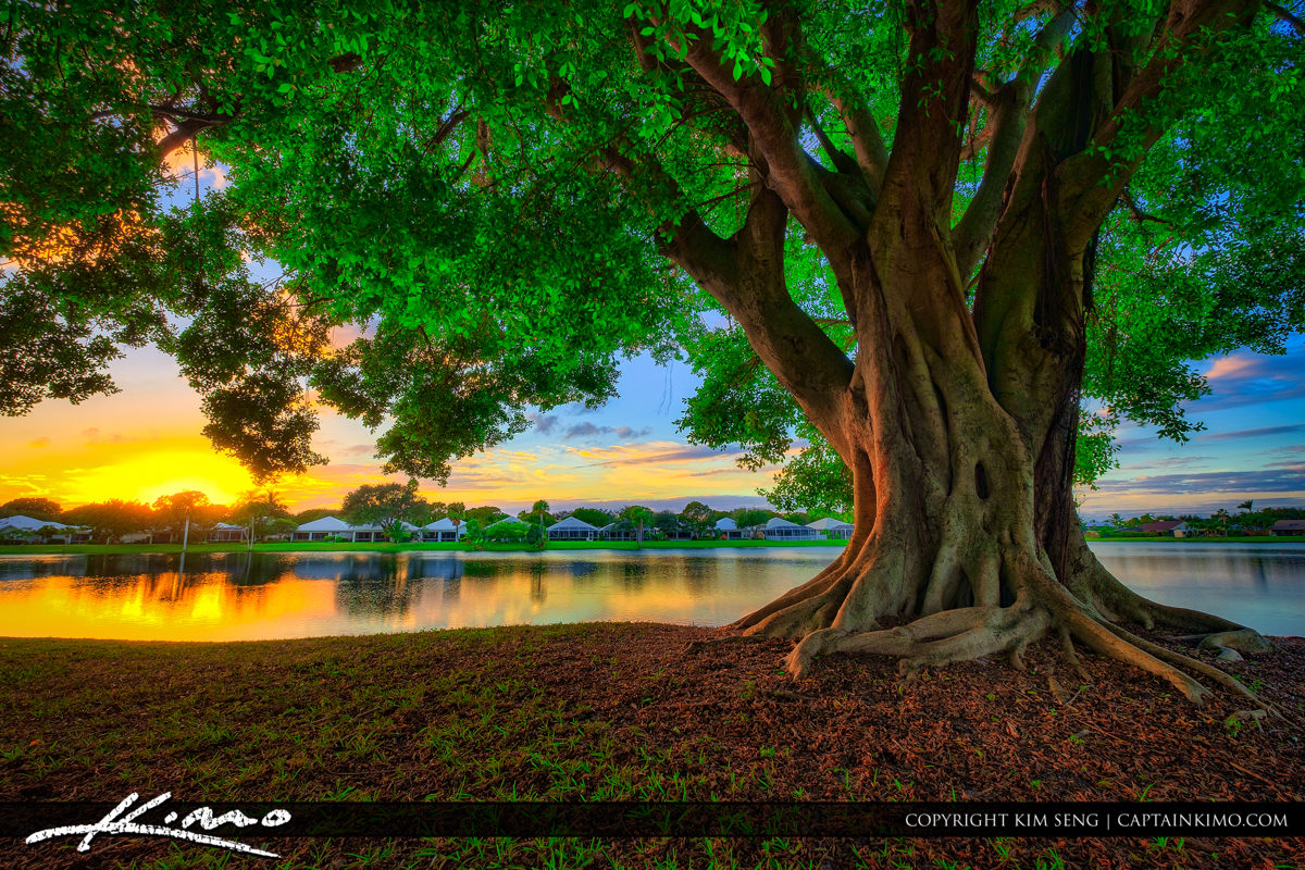 Palm Beach Gardens | Product Categories | Royal Stock Photo