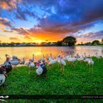 Lake Sunset Palm Beach Gardens Florida with Ducks and Ibis